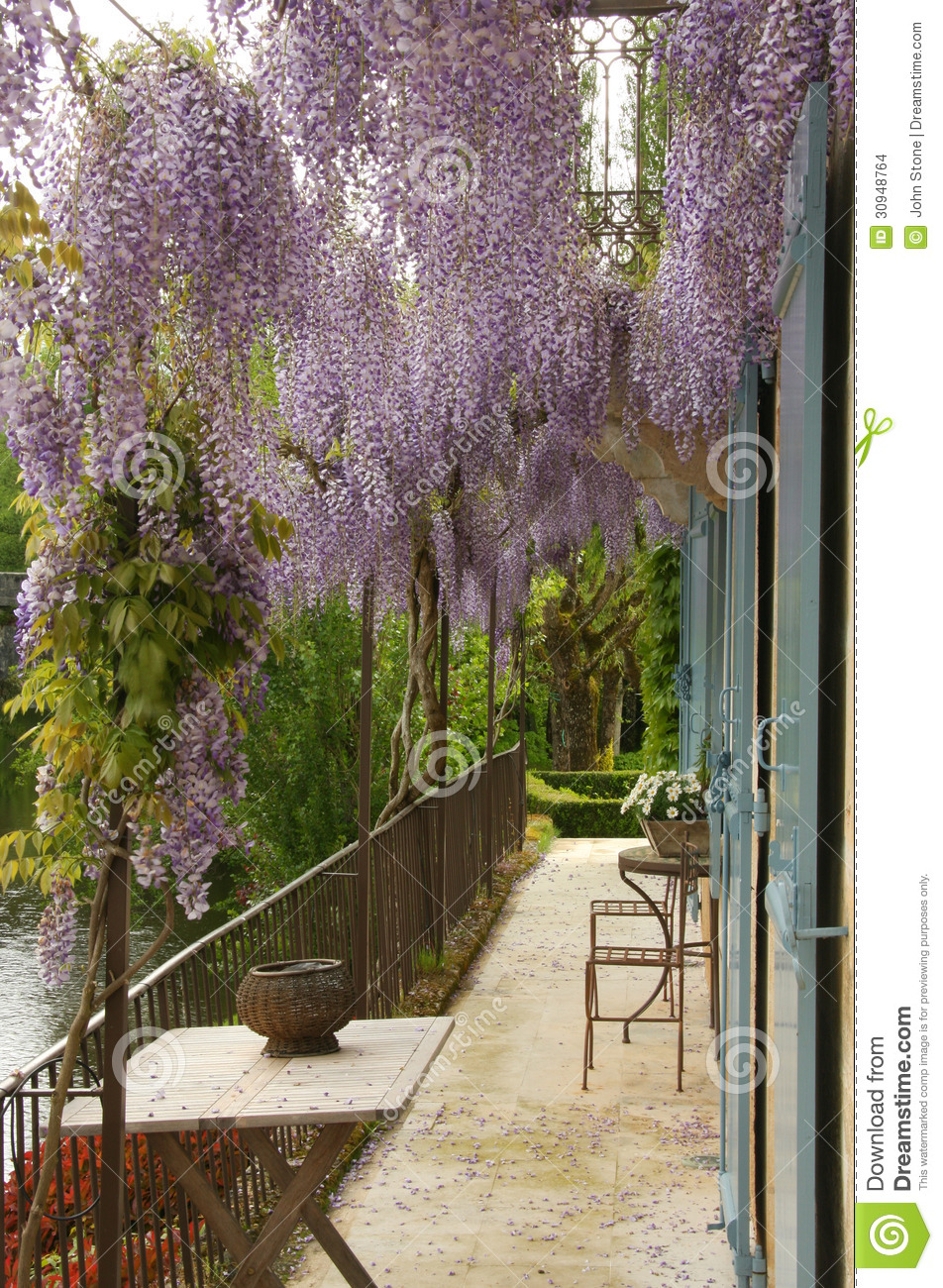 fleurs de glycine au dessus de balcon photo stock image. Black Bedroom Furniture Sets. Home Design Ideas