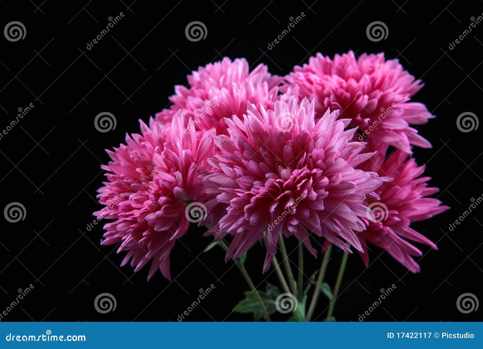 Fleurs de Guldaudi