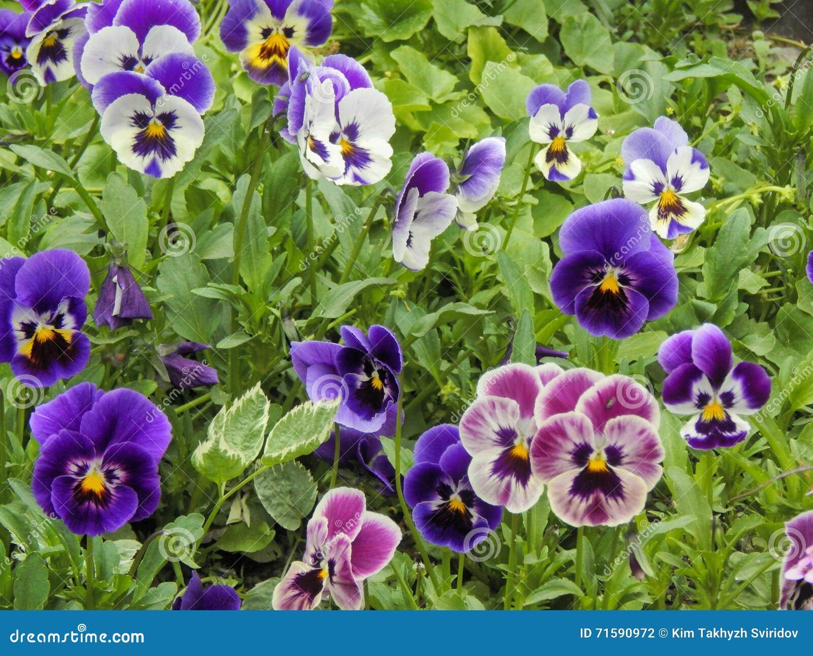 Fleurs de jardin d\'automne photo stock. Image du beauté - 71590972