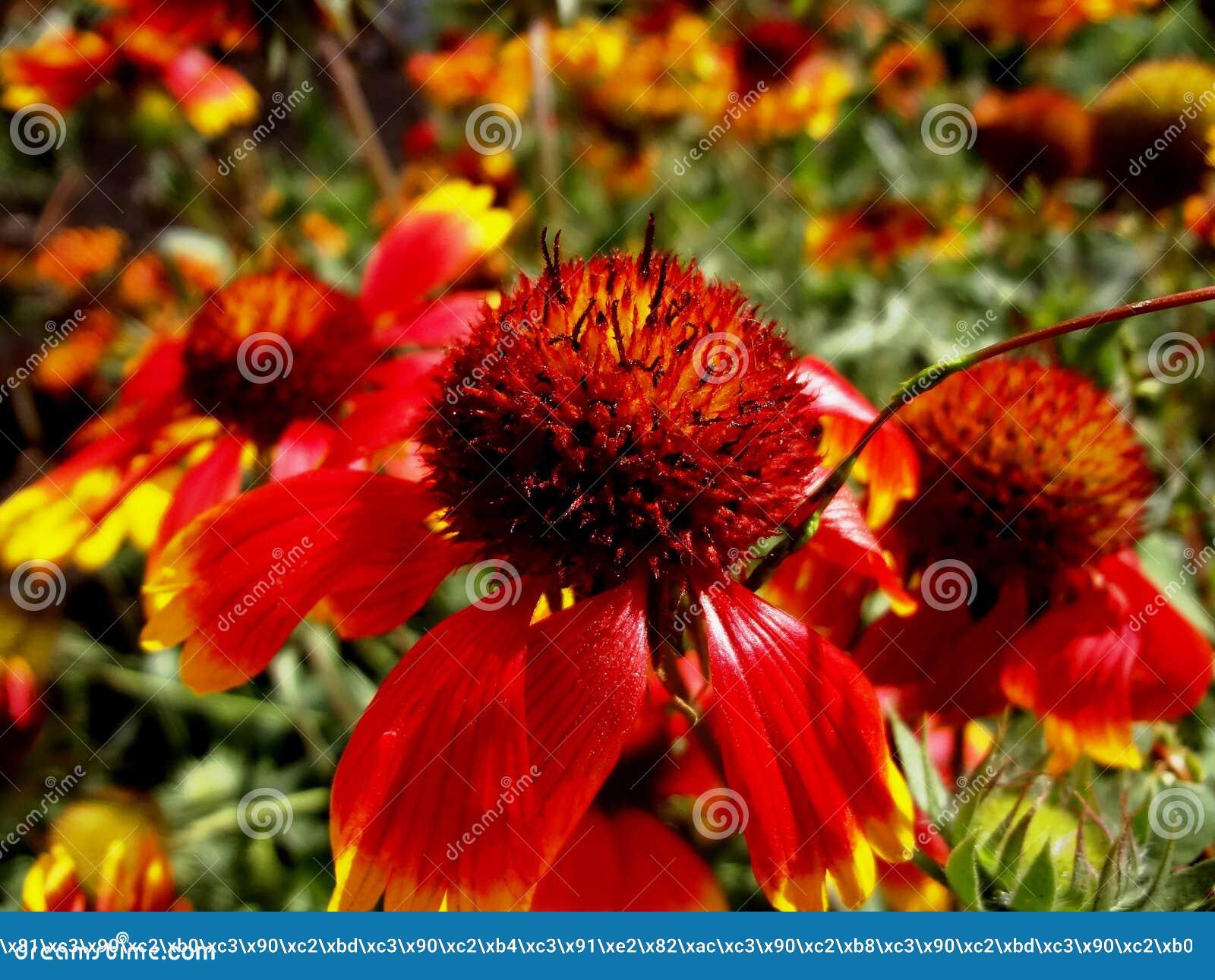 Fleurs De Juillet