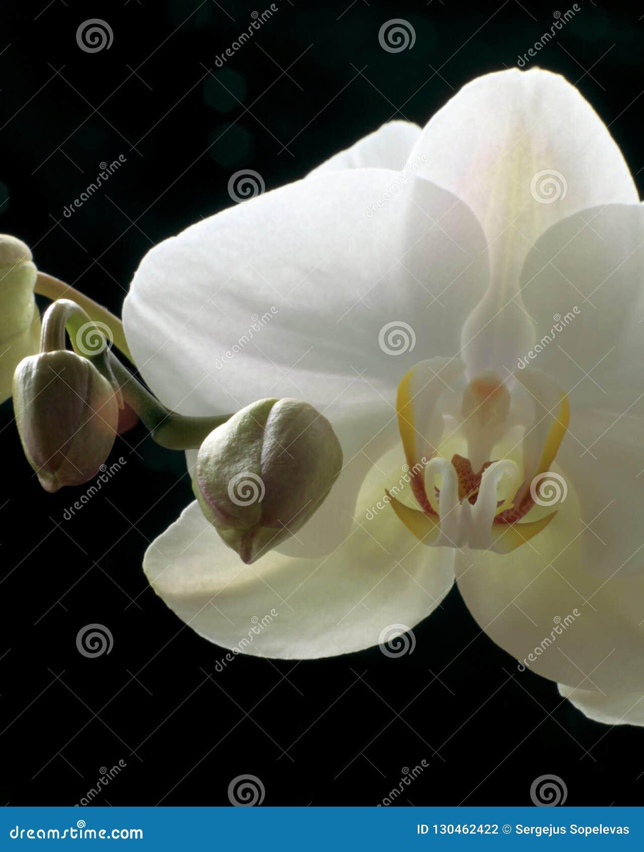 Fleurs de l amour