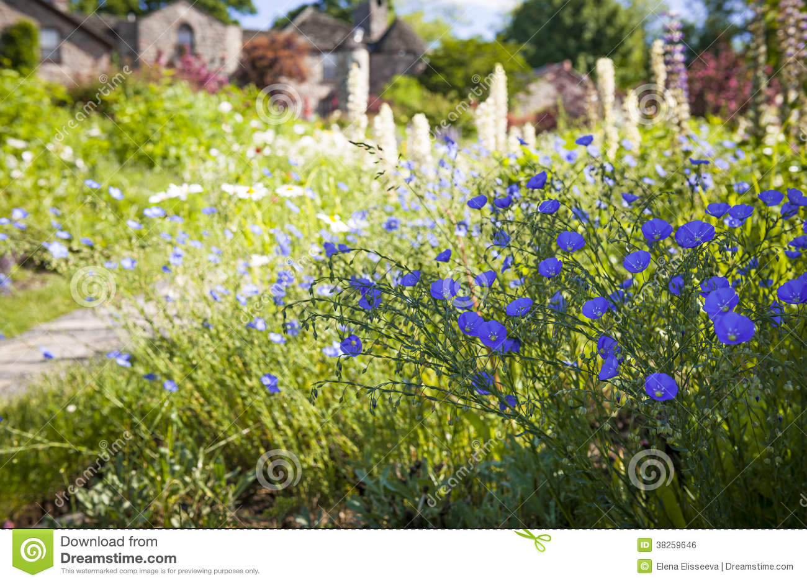 Fleurs jardin ete for Fleurs dans le jardin