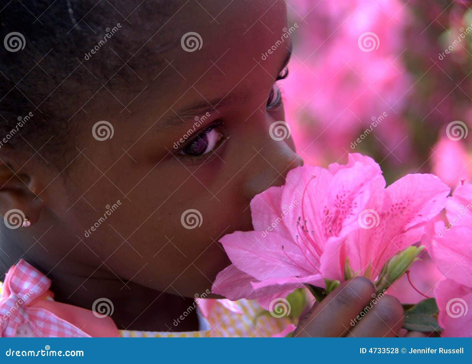 Fleurs de mai photo stock. Image du orphelin, diversité - 4733528