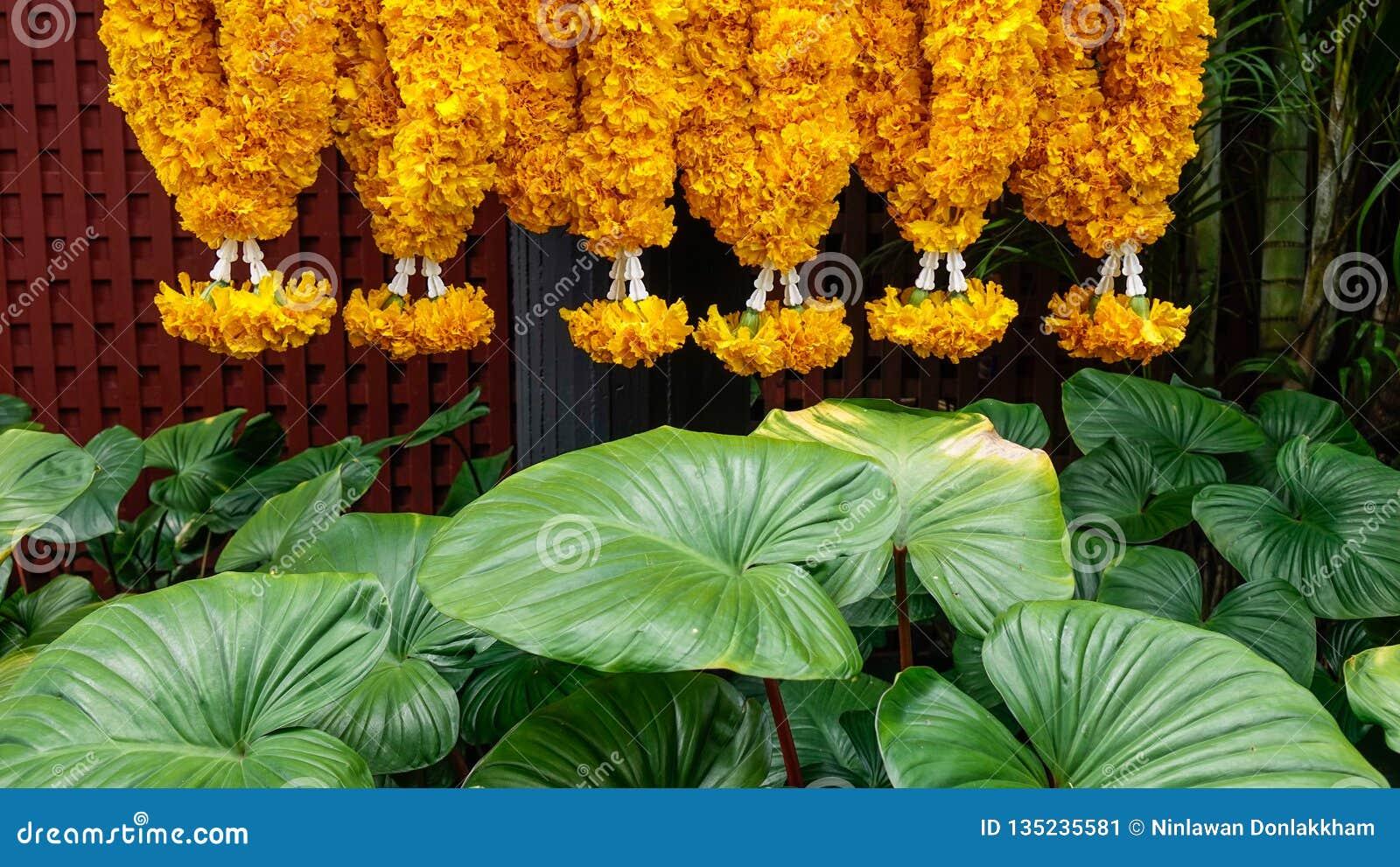 Fleurs de prière avec les plantes vertes