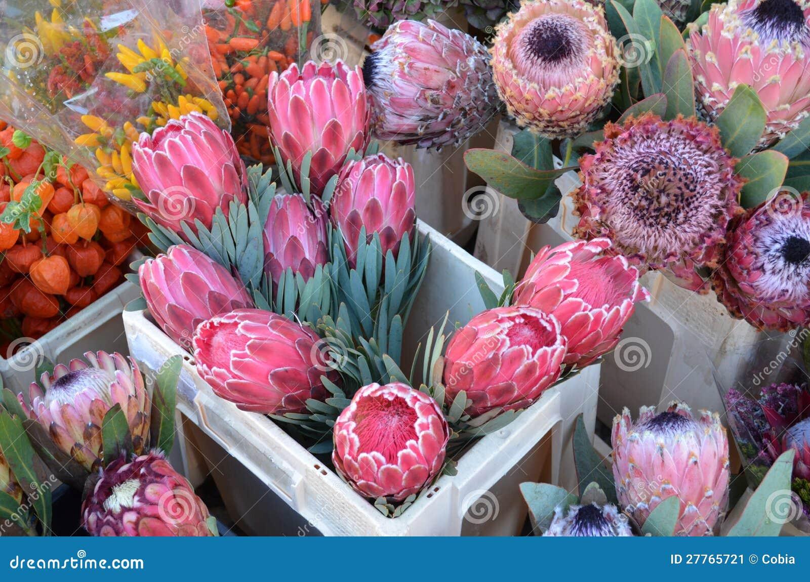 Fleurs de Protea sur le marché d un fermier