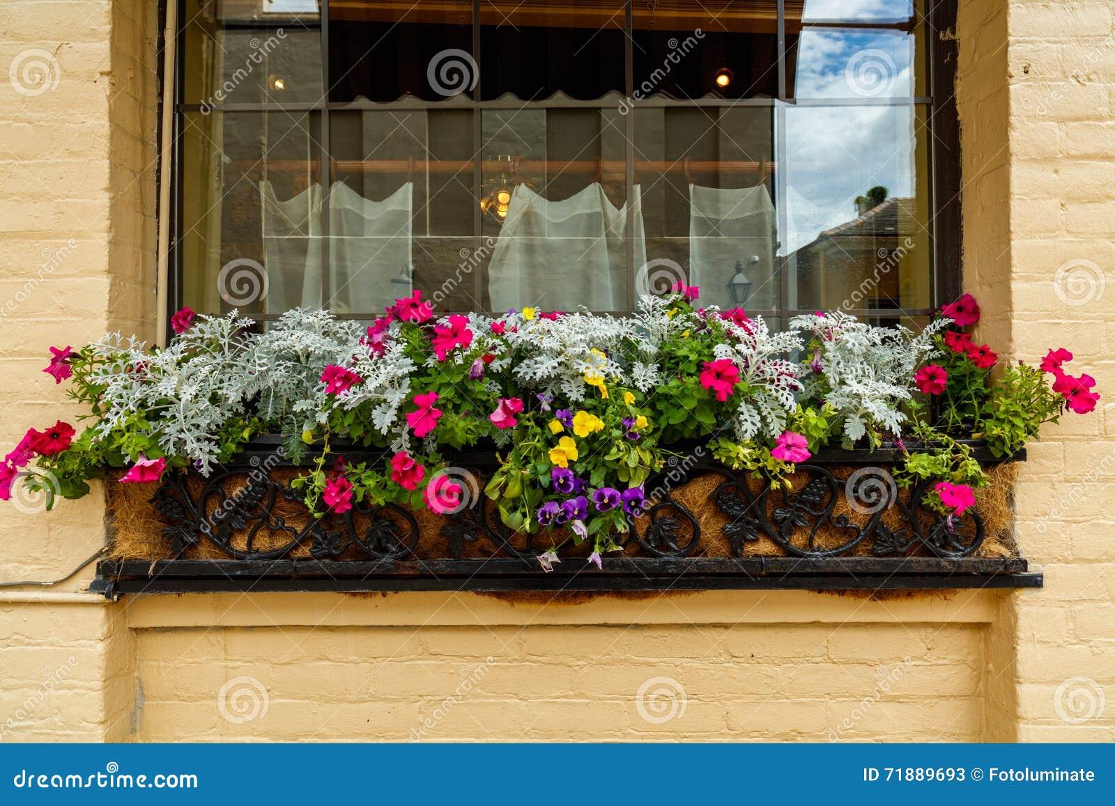 Fleurs de quartier français
