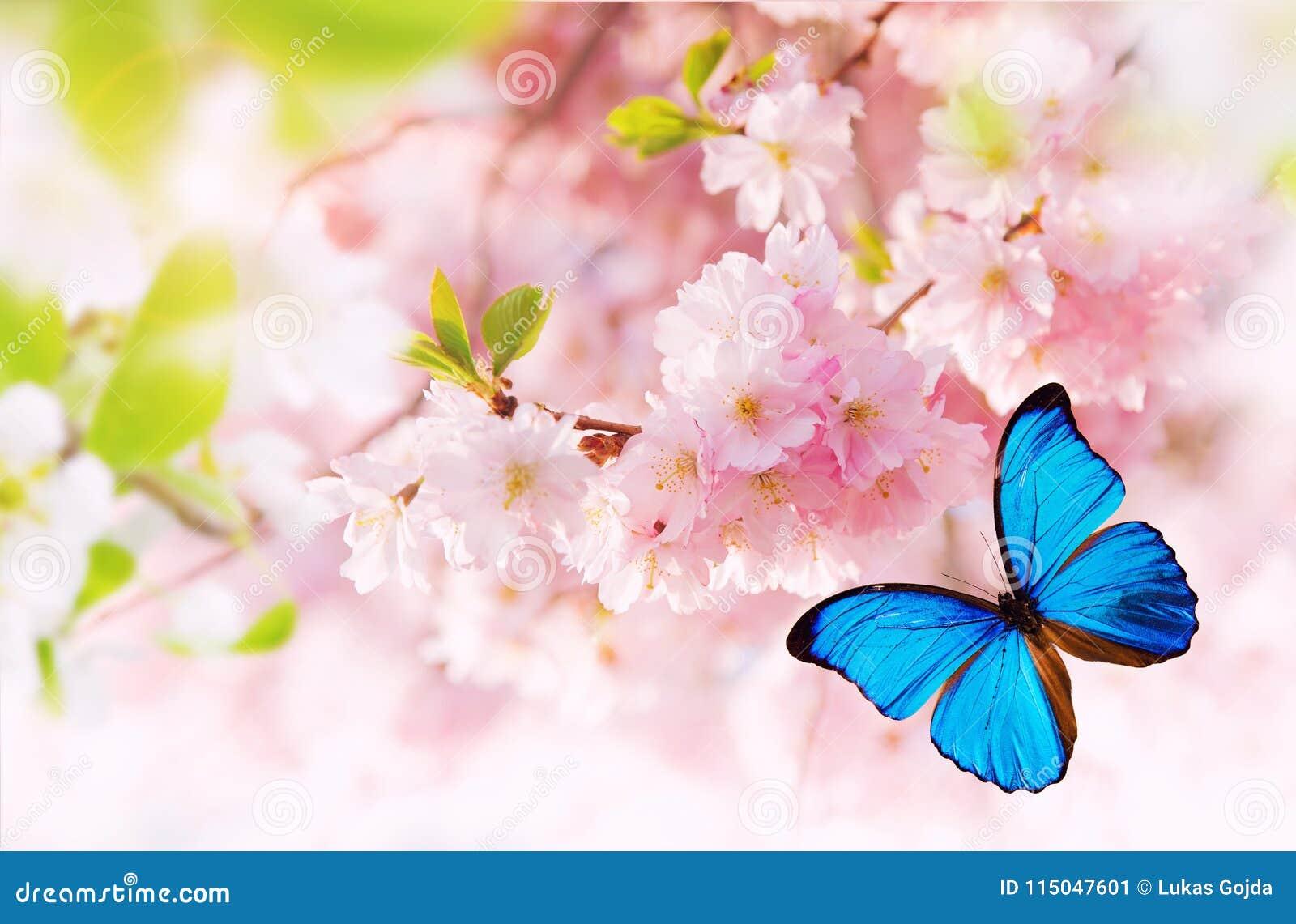 Fleurs de ressort avec le papillon exotique