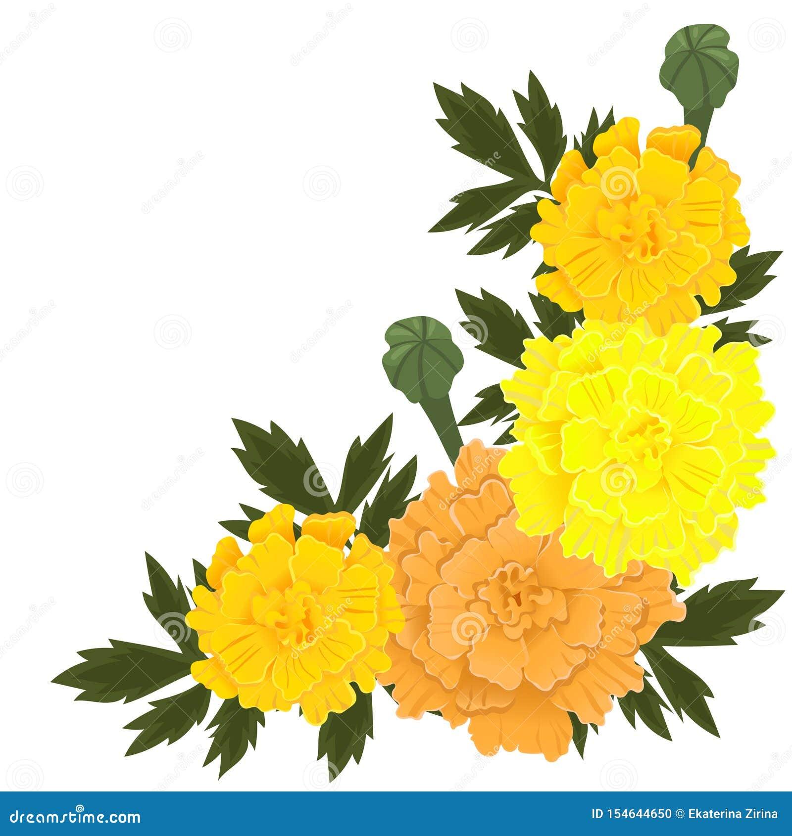 Fleurs De Souci De Couleur Jaune Et Orange Disolement Sur