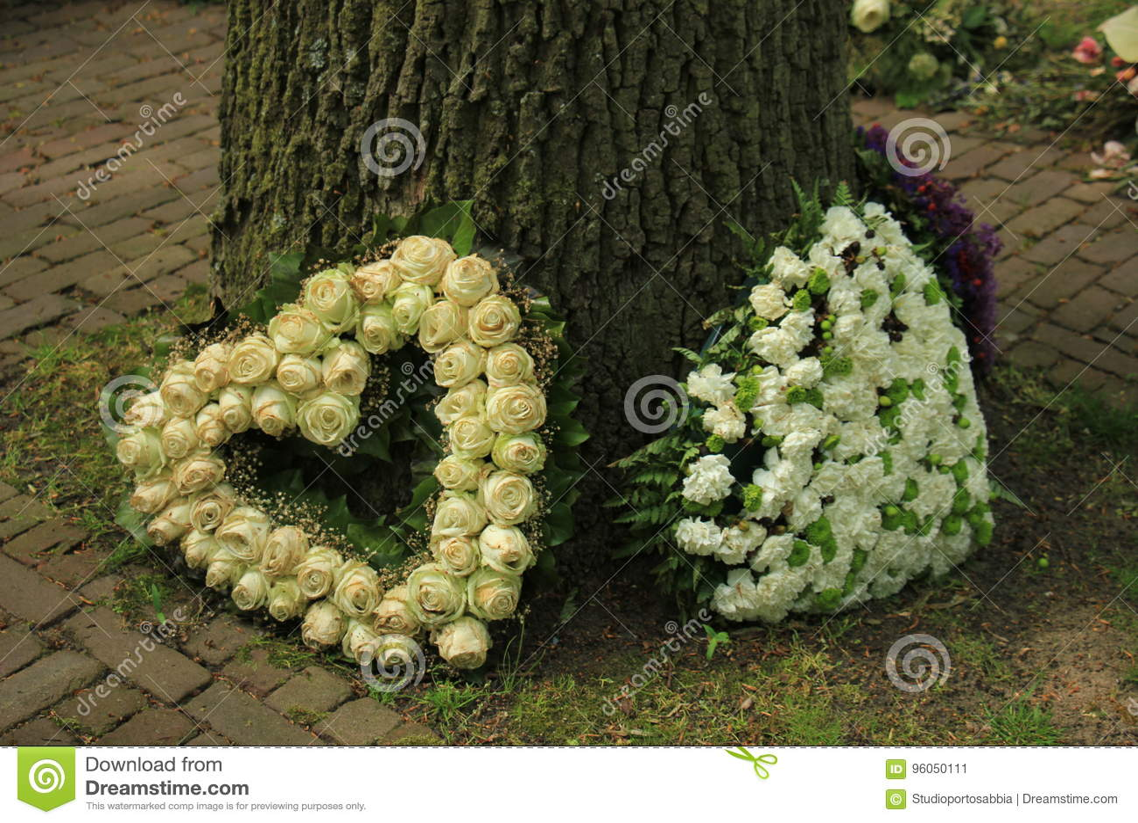 Fleurs de sympathie près d un arbre