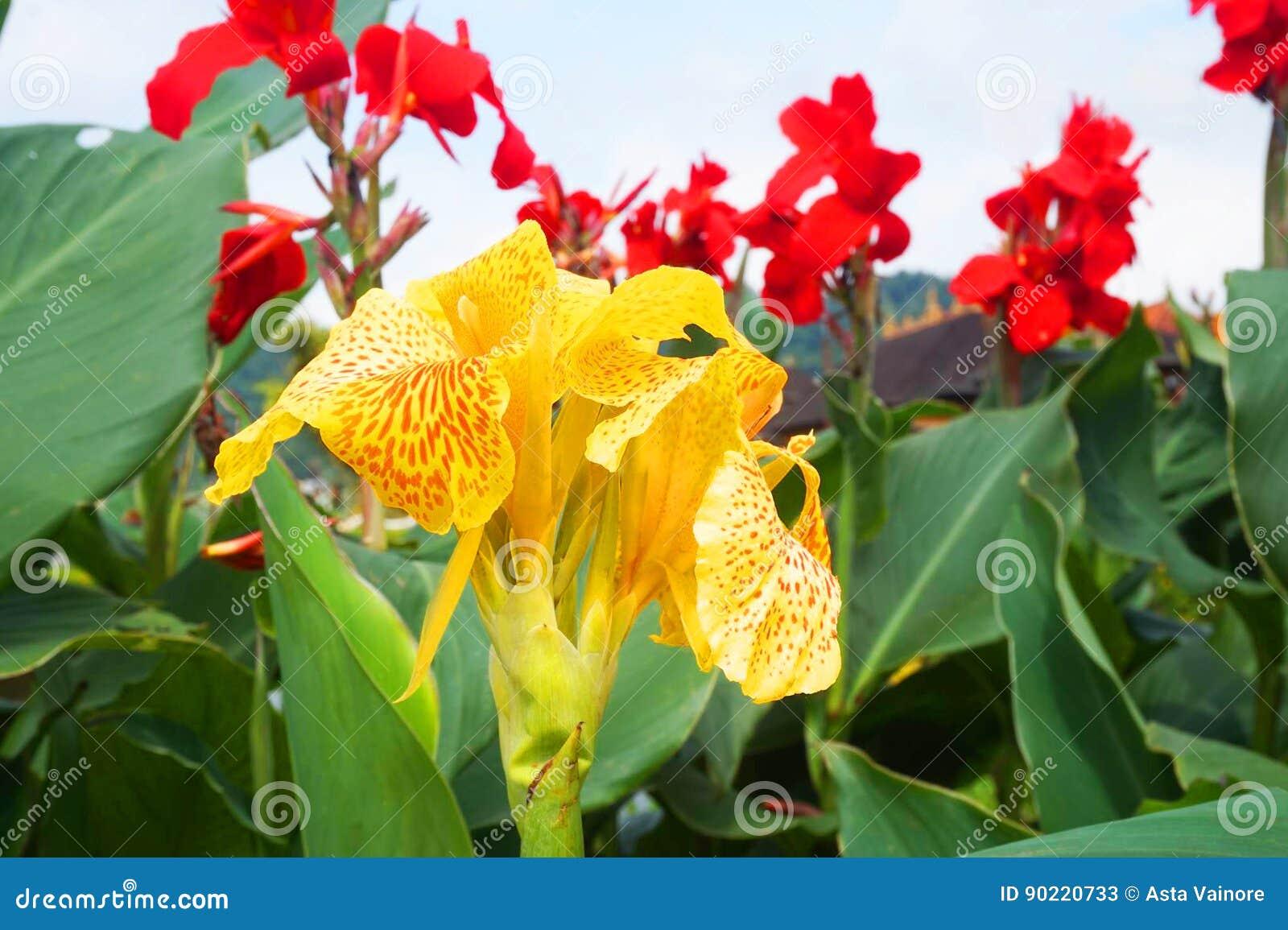 Fleurs de temple d Ulun Danu