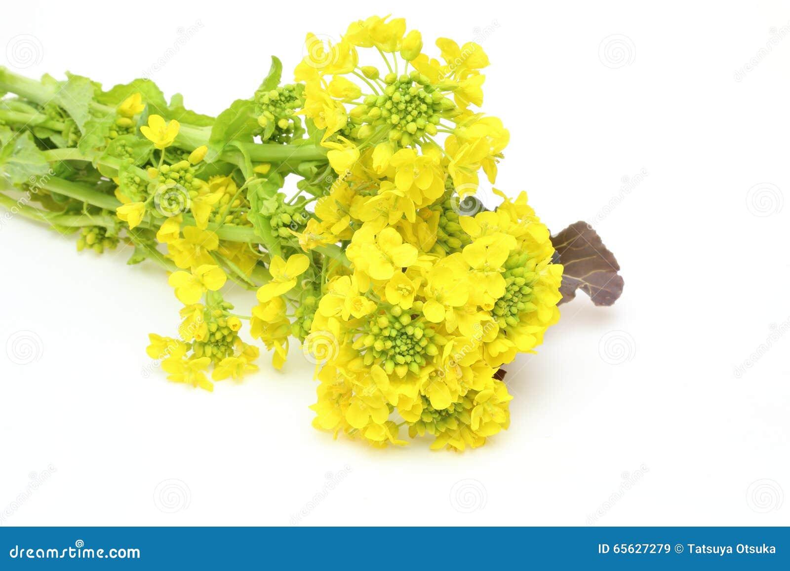 Fleurs de viol