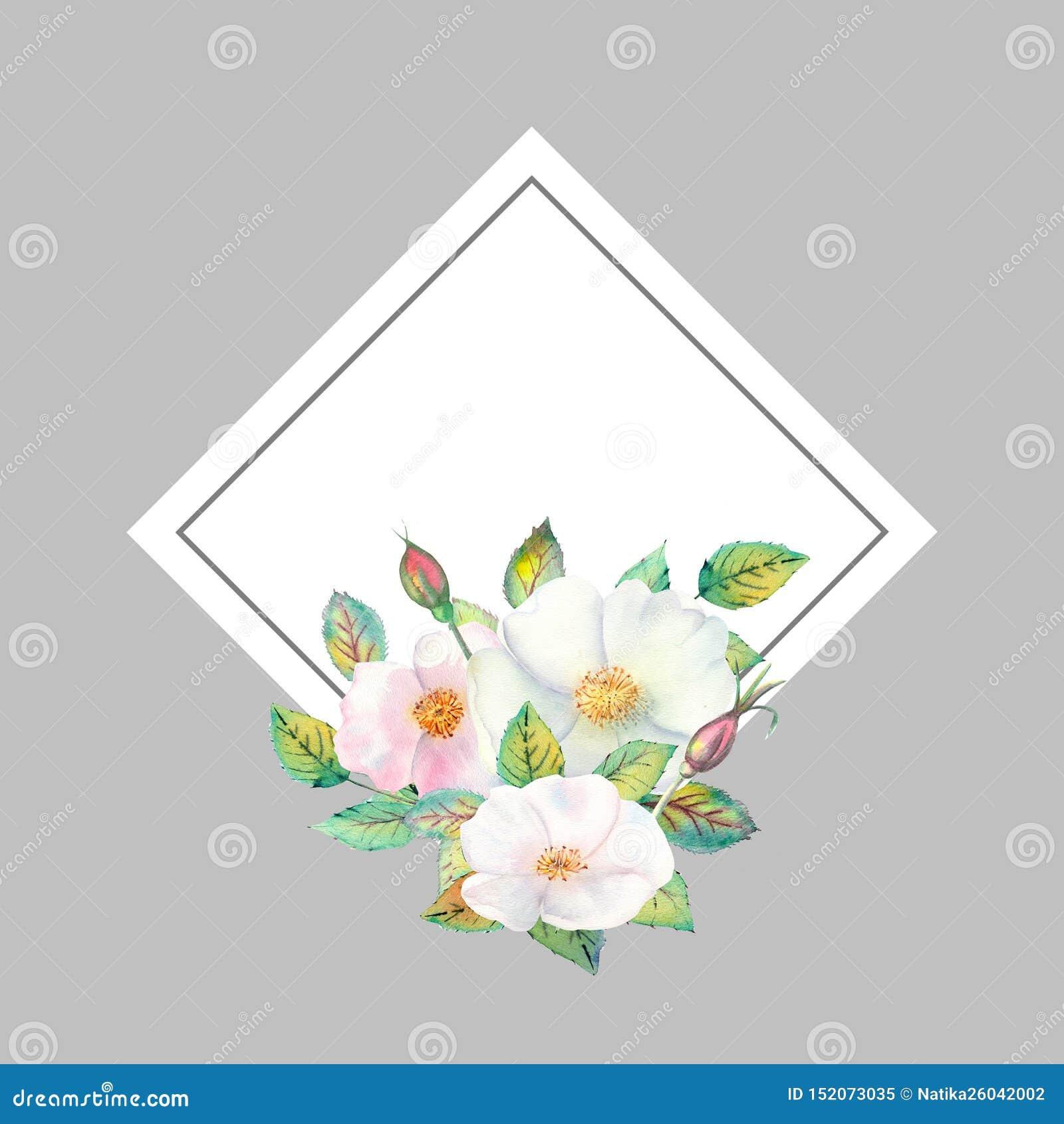 Fleurs des cynorrhodons blancs, fruits rouges, feuilles vertes, la composition dans un cadre d or géométrique r