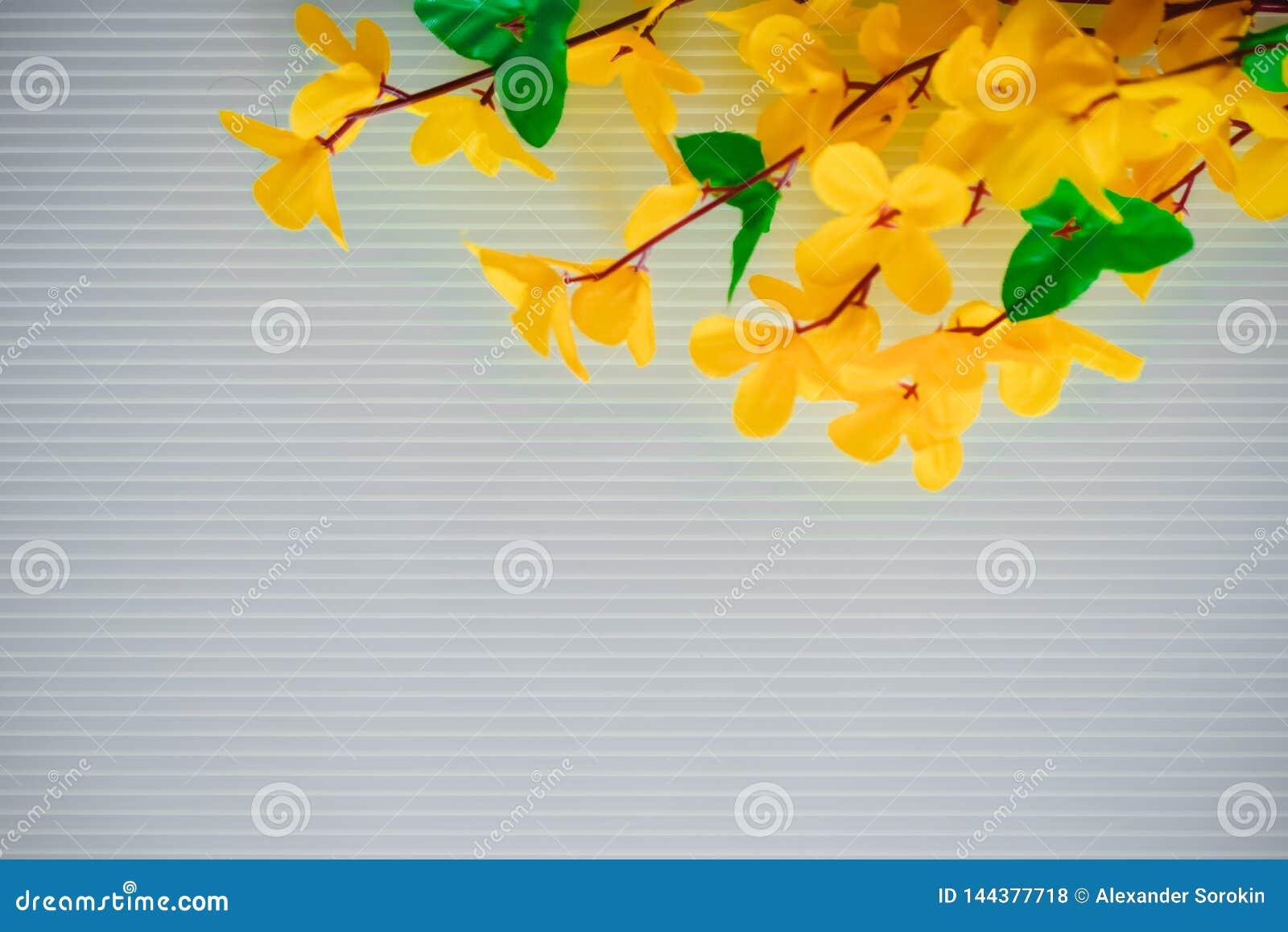 Fleurs des matériaux légers artificiels jaunes, fleurs jaunes d acacia