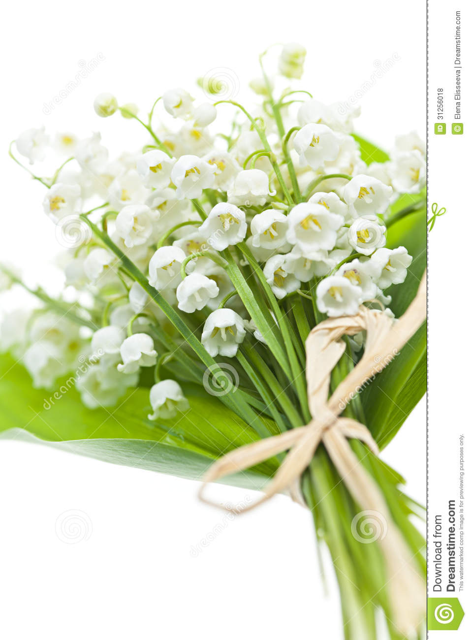 Fleurs du muguet sur le blanc photos libres de droits - Bouquet de muguet photo ...