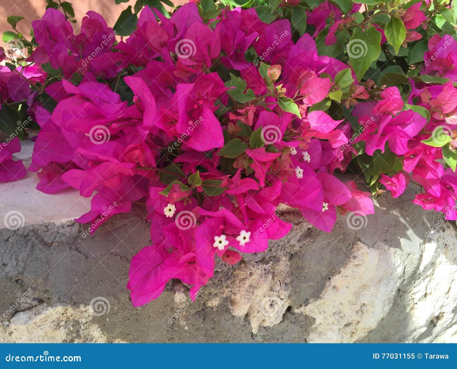fleurs du sud photo stock - image: 77031155