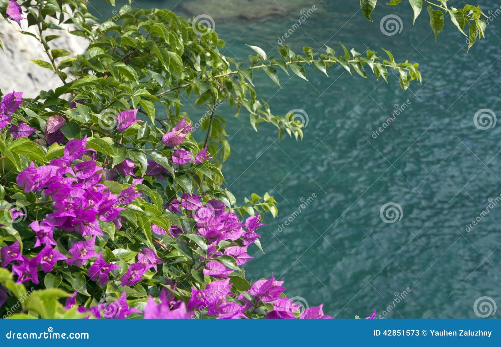 fleurs du sud lumineuses 1 photo stock - image: 42851573