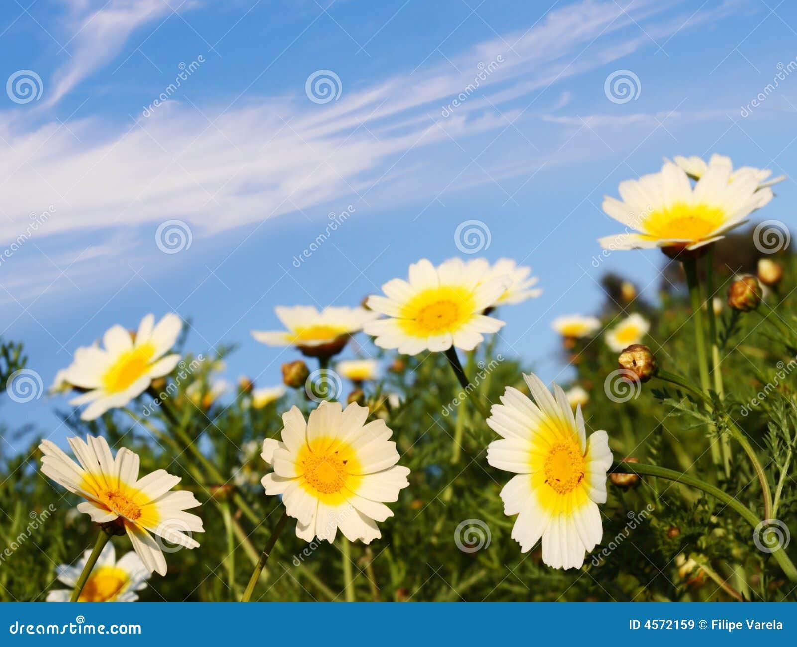 Fleurs en nature