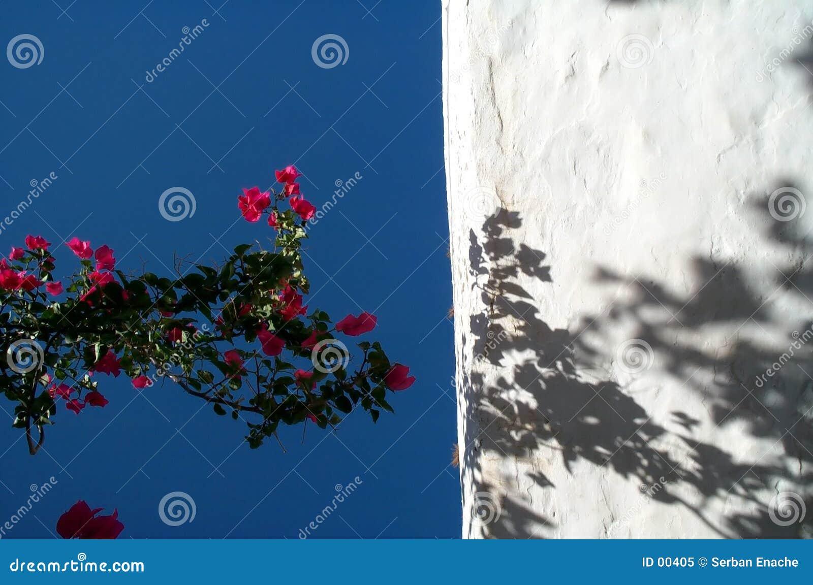 Fleurs et ciel