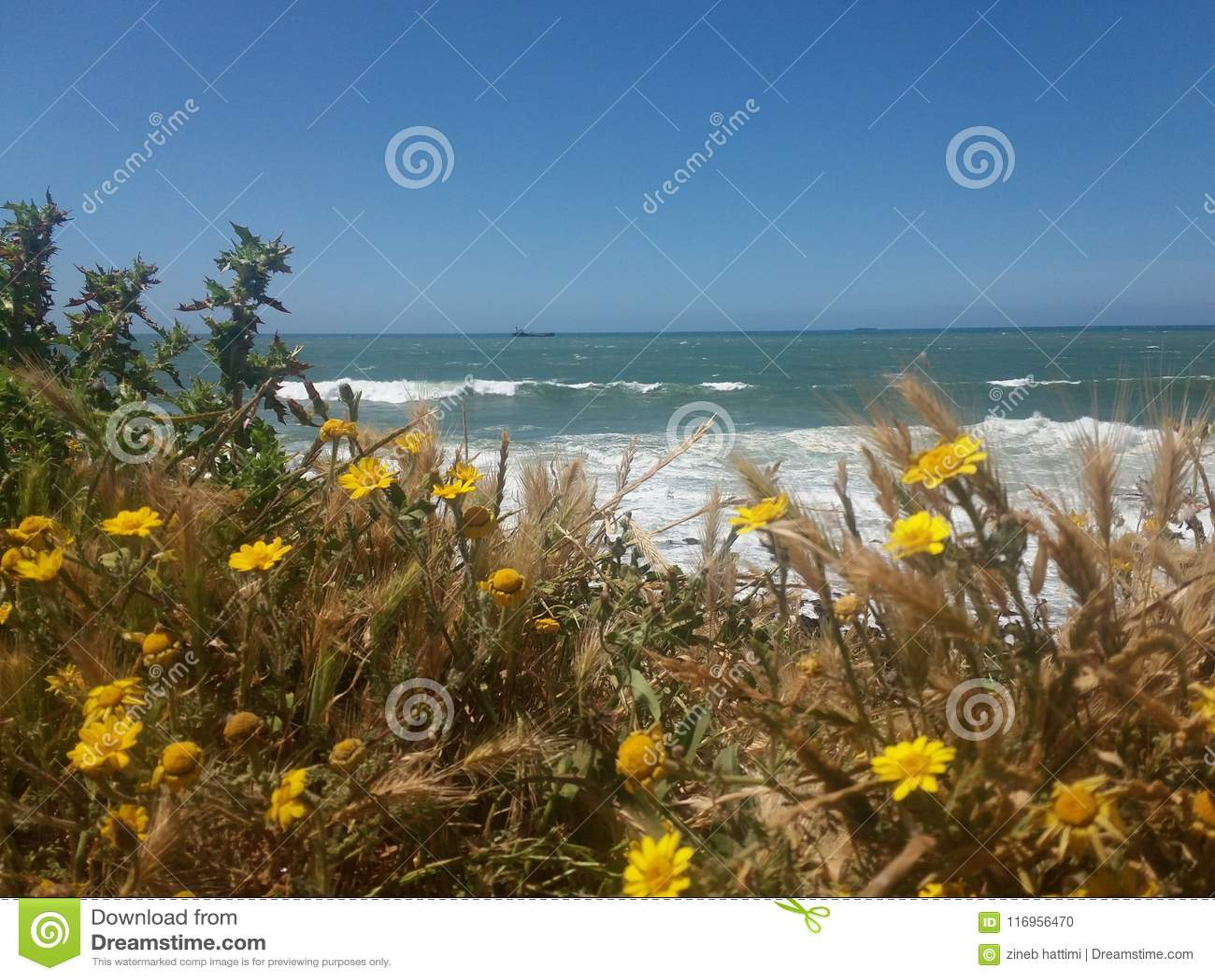 Fleurs et mer