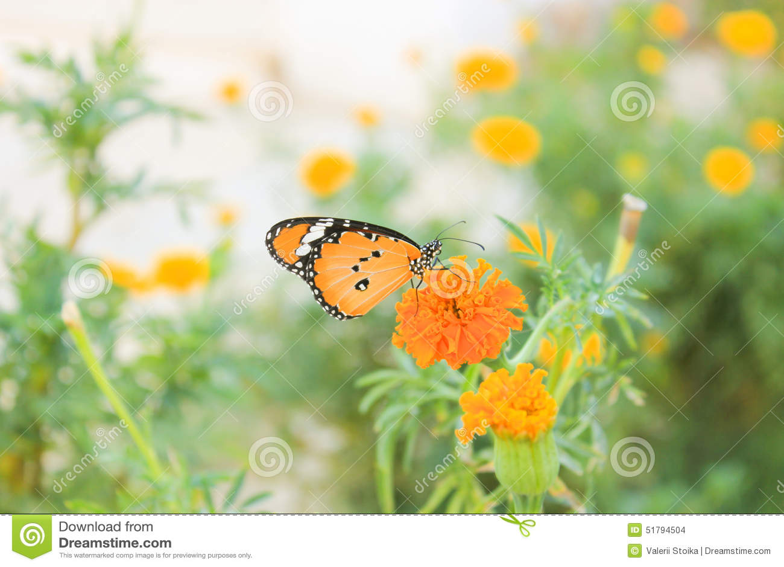 Fleurs et papillon photo stock image 51794504 - Image papillon et fleur ...