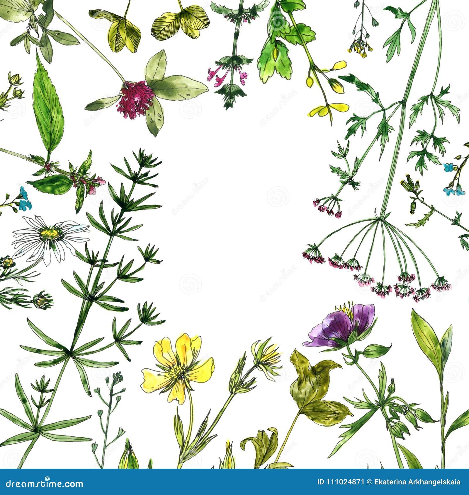 Fleurs Et Plantes De Dessin D Aquarelle Illustration Stock