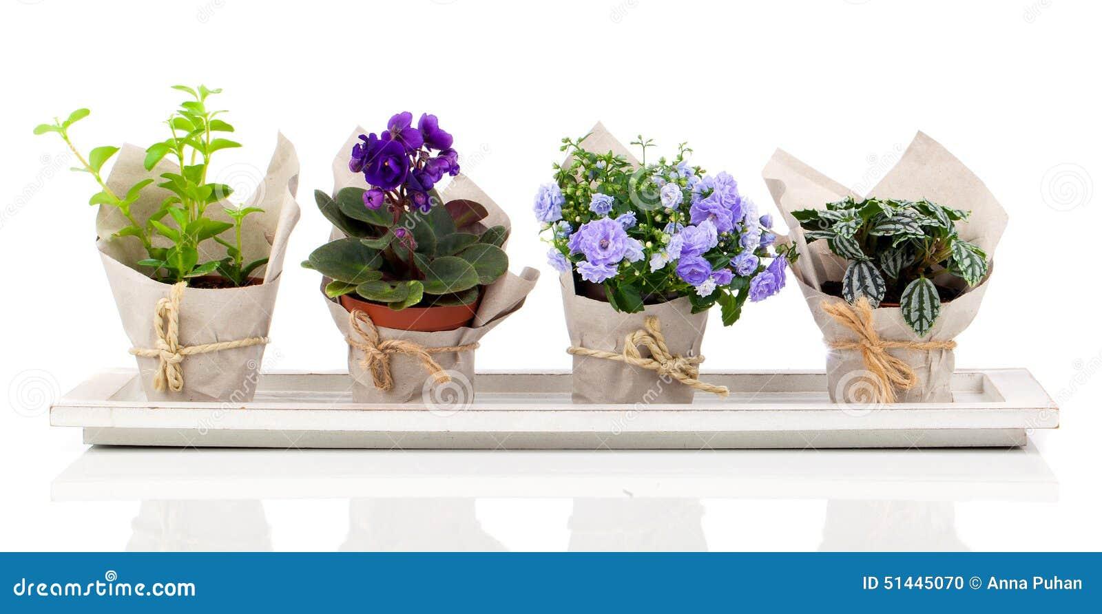Fleurs et plantes de ressort dans l 39 emballage de papier for Catalogue fleurs et plantes