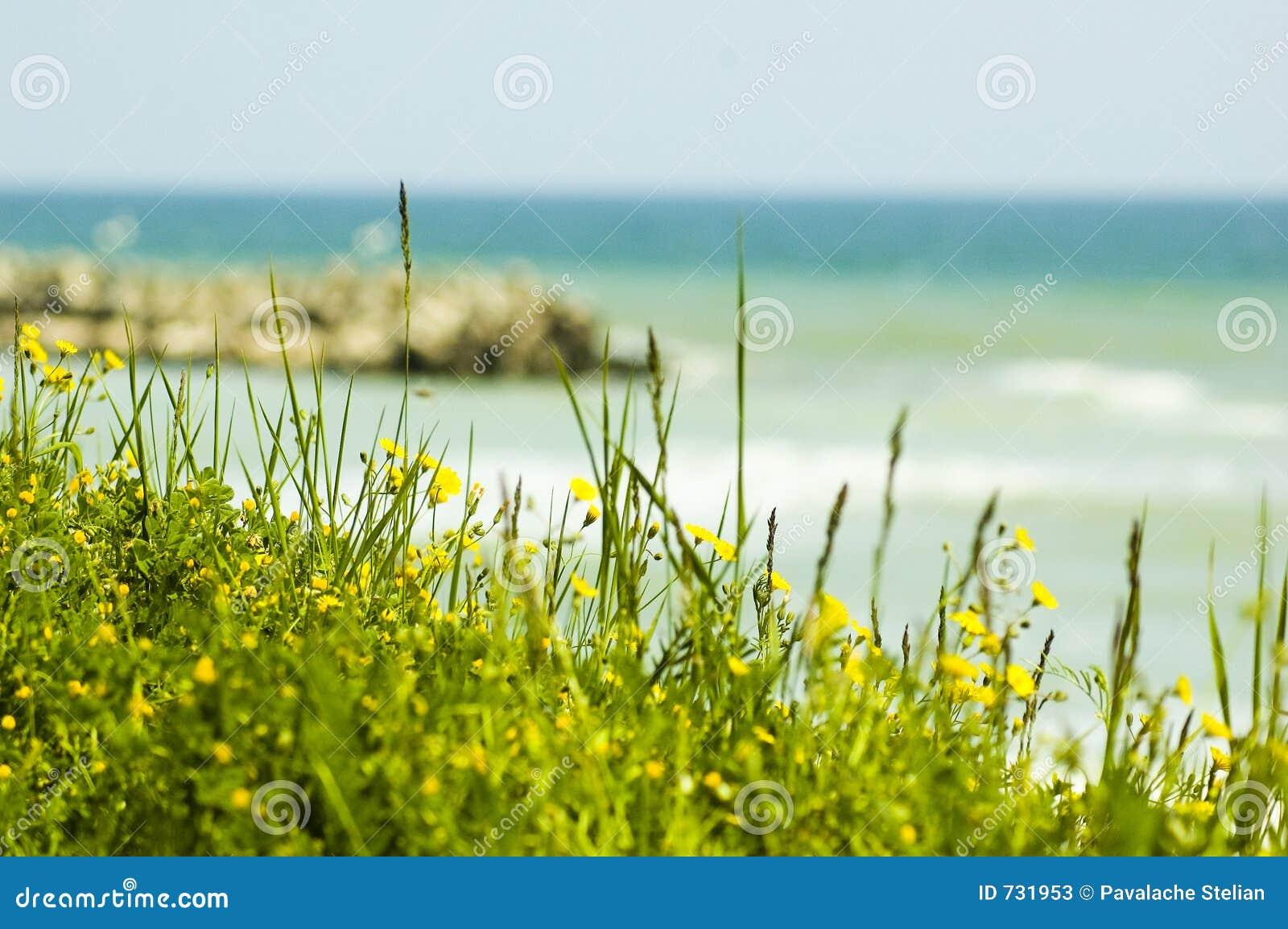 Fleurs et zones vertes par la mer.