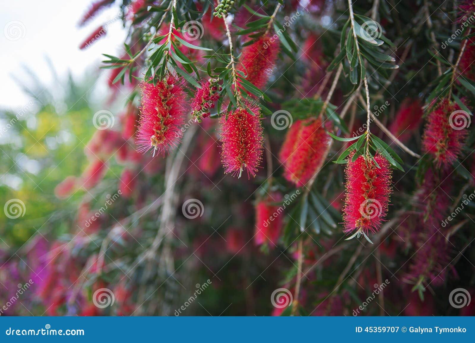 Fleurs exotiques rouges