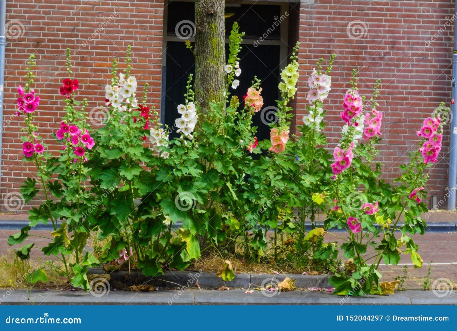 Fleurs fleurissant pendant l été