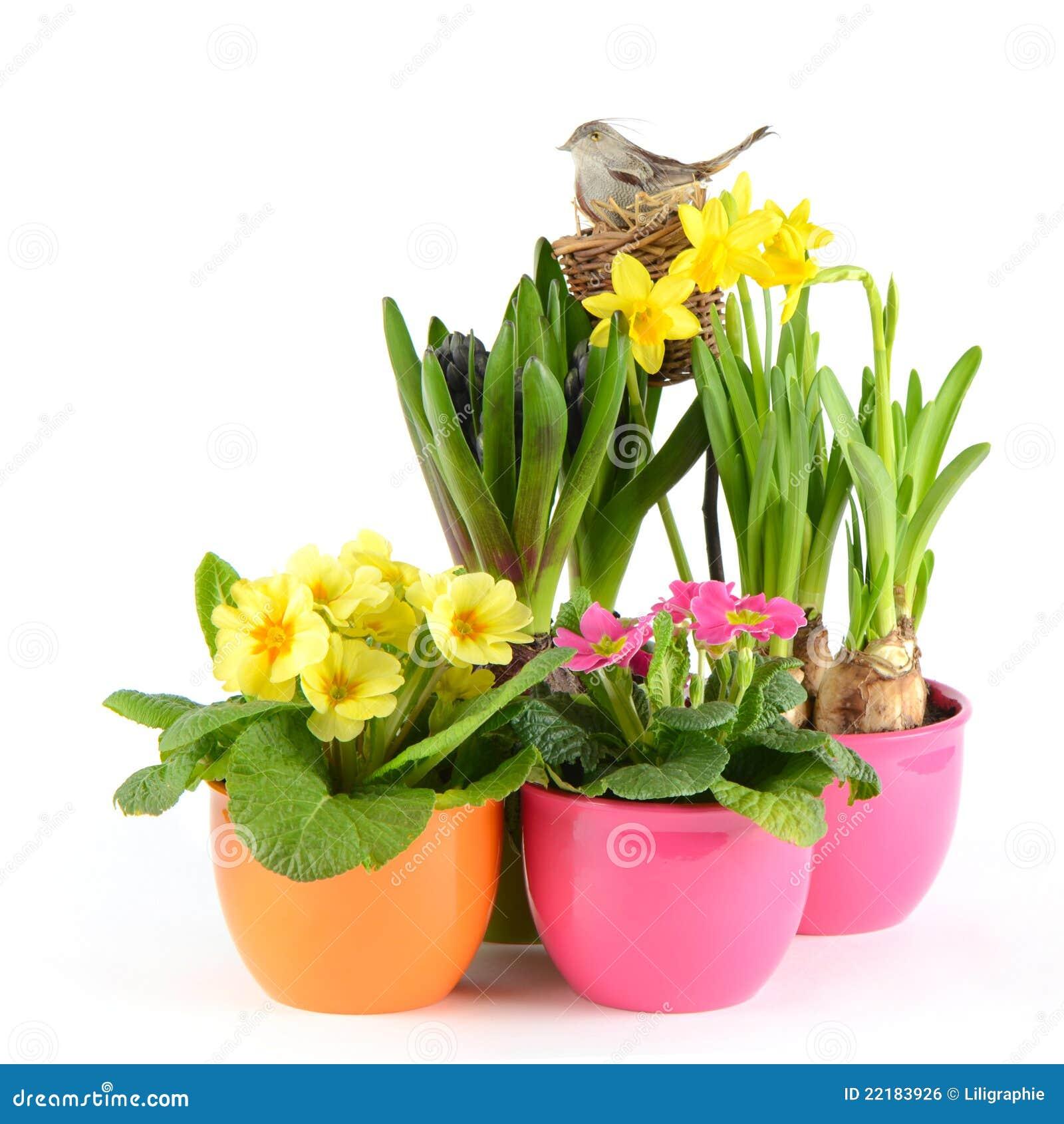 fleurs fra ches de source d coration de p ques image libre de droits image 22183926. Black Bedroom Furniture Sets. Home Design Ideas