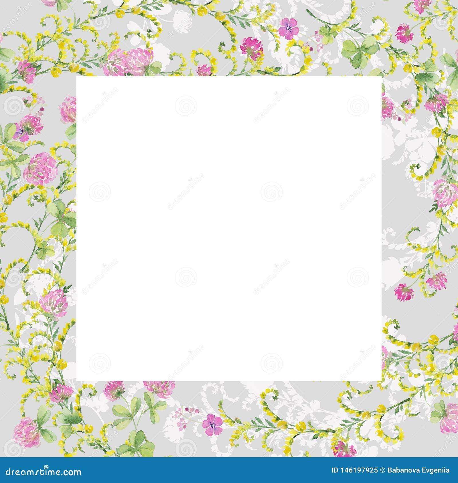Fleurs grises d aquarelle de cadre de trèfle rose et de vesce jaune Dessin de main pour des cartes, invitations, d?cor
