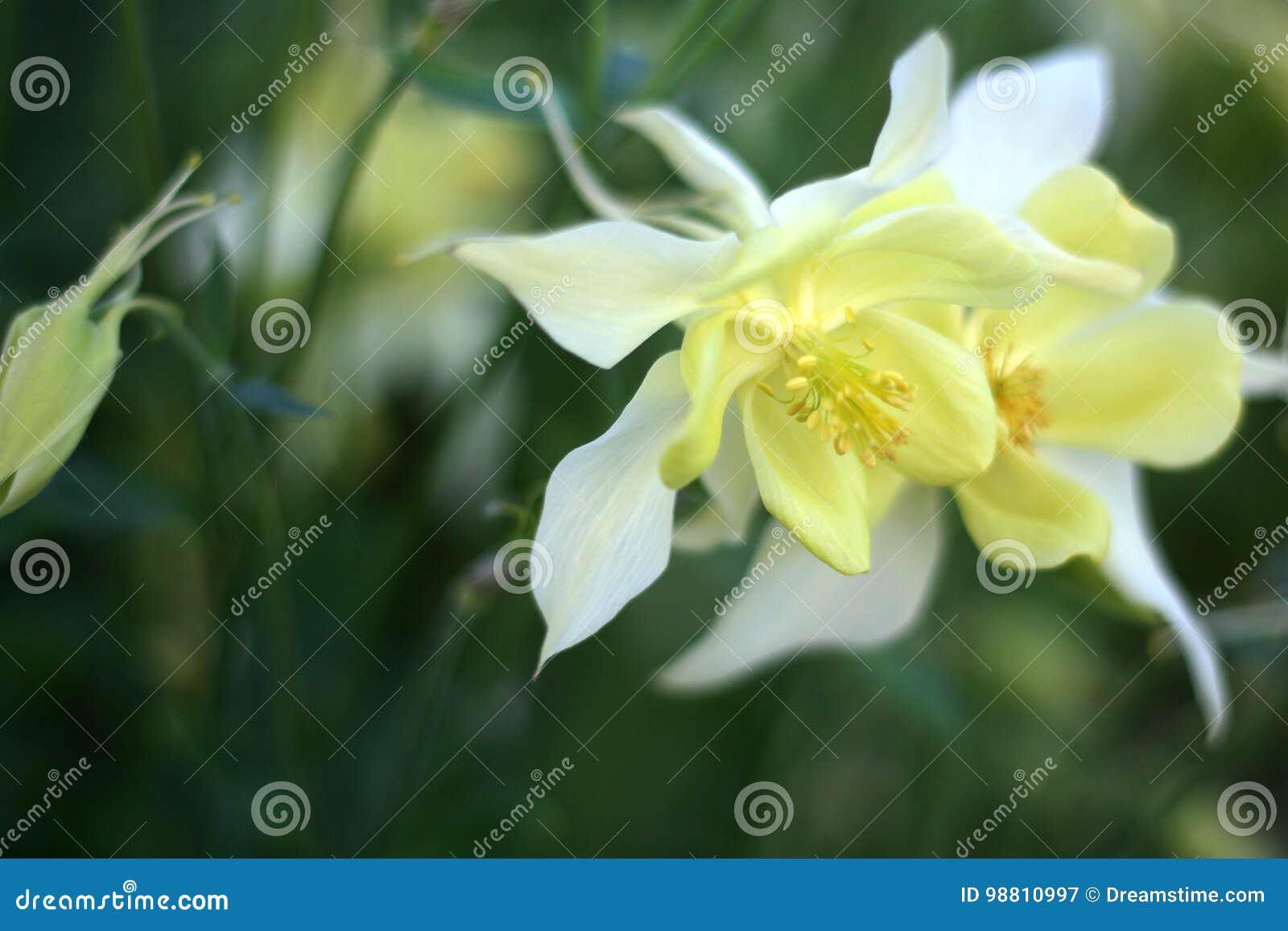 Fleurs Jaune-blanches