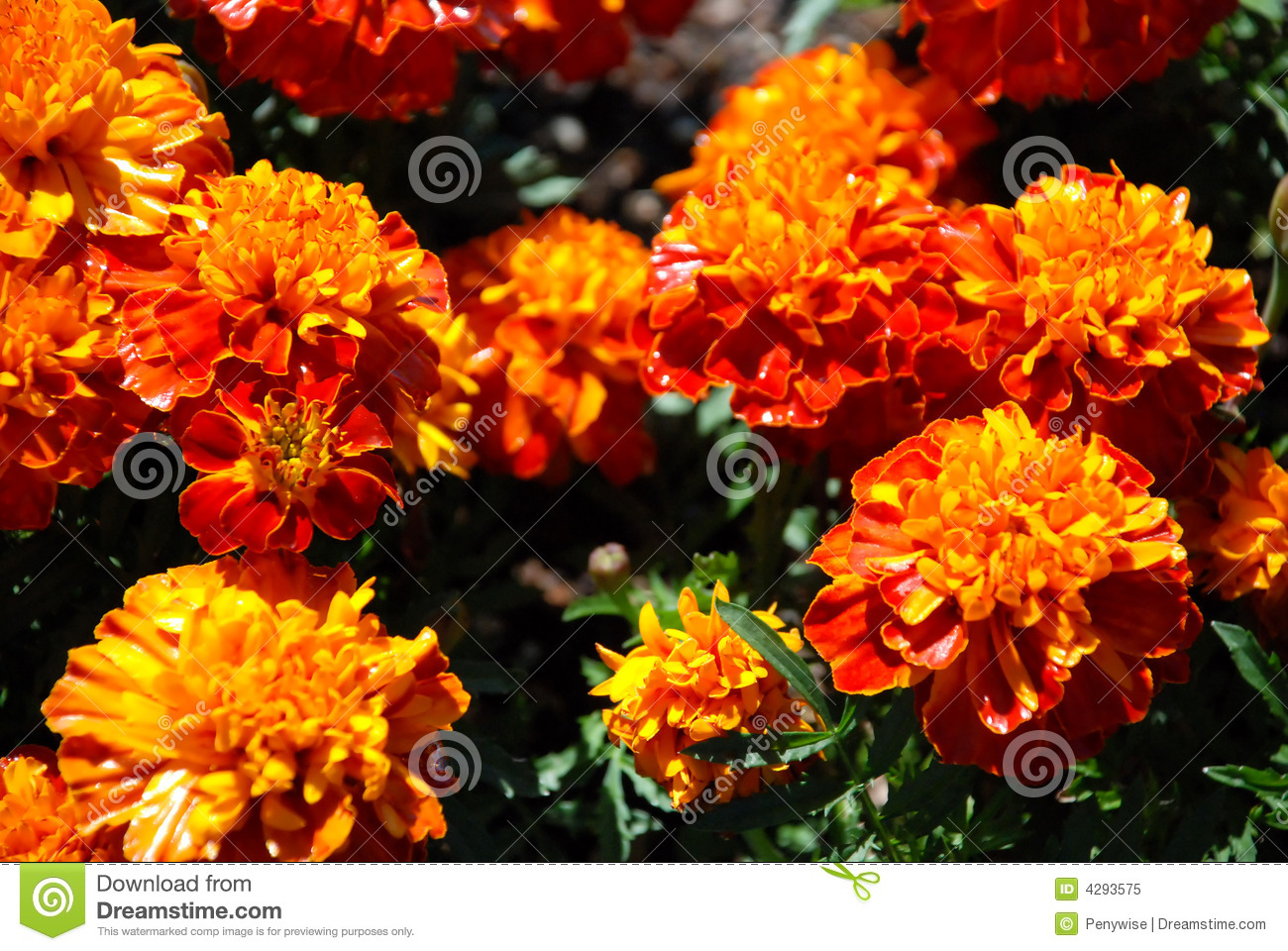 Fleurs Jaune Orange Image Stock Image Du Fleur Outdoors 4293575