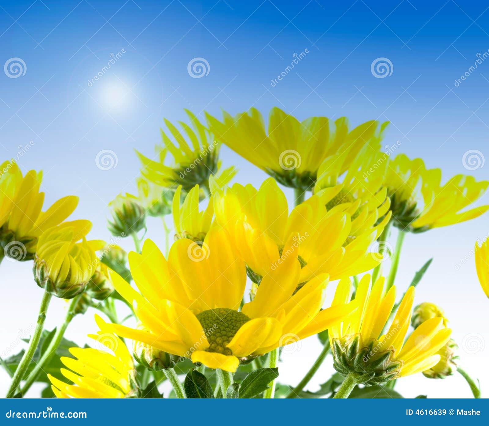 Fleurs jaunes au printemps image stock image du pays 4616639 - Arbuste fleurs jaunes printemps ...