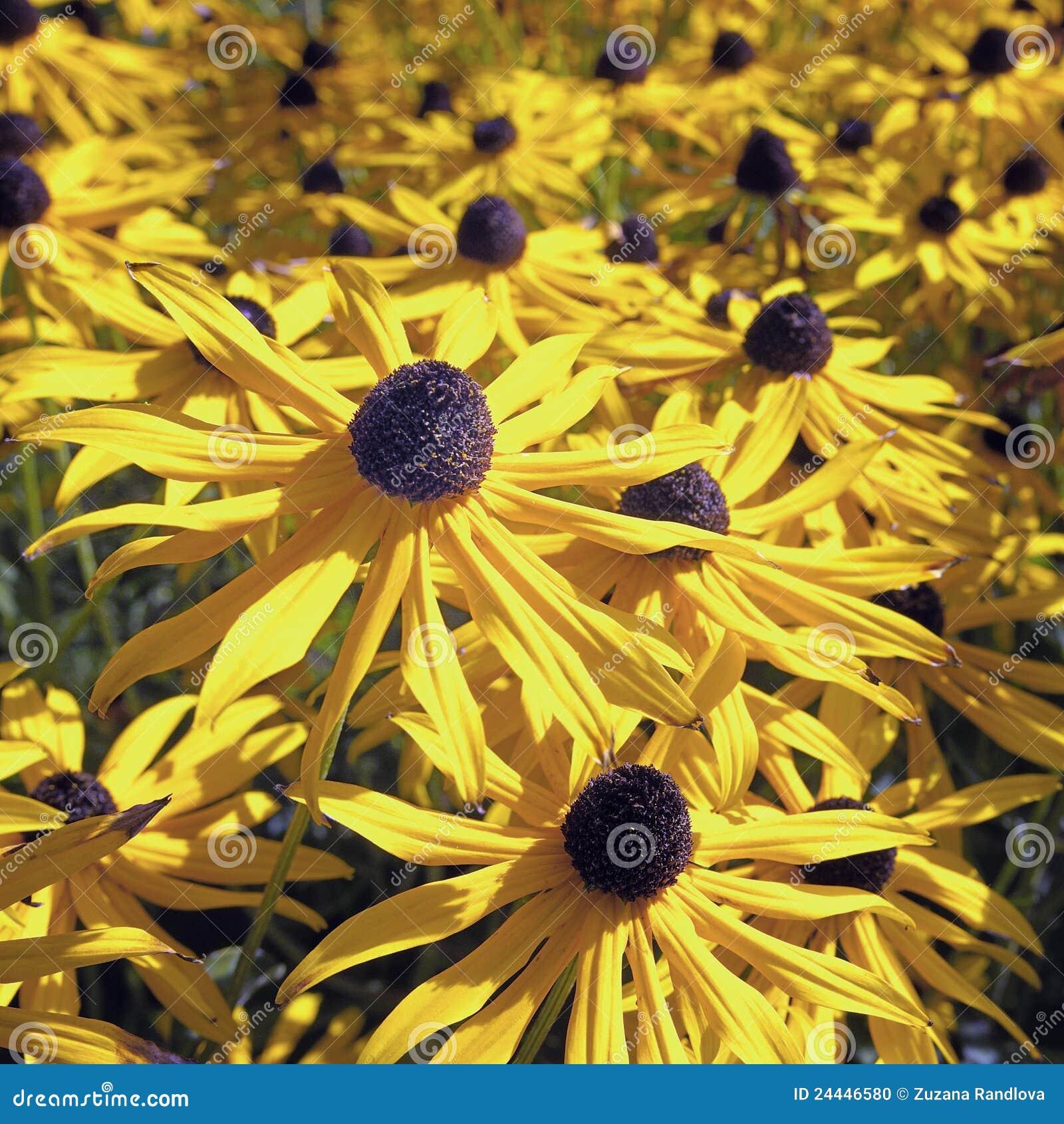 Plus d`images similaires à ` Fleurs jaunes d automne `