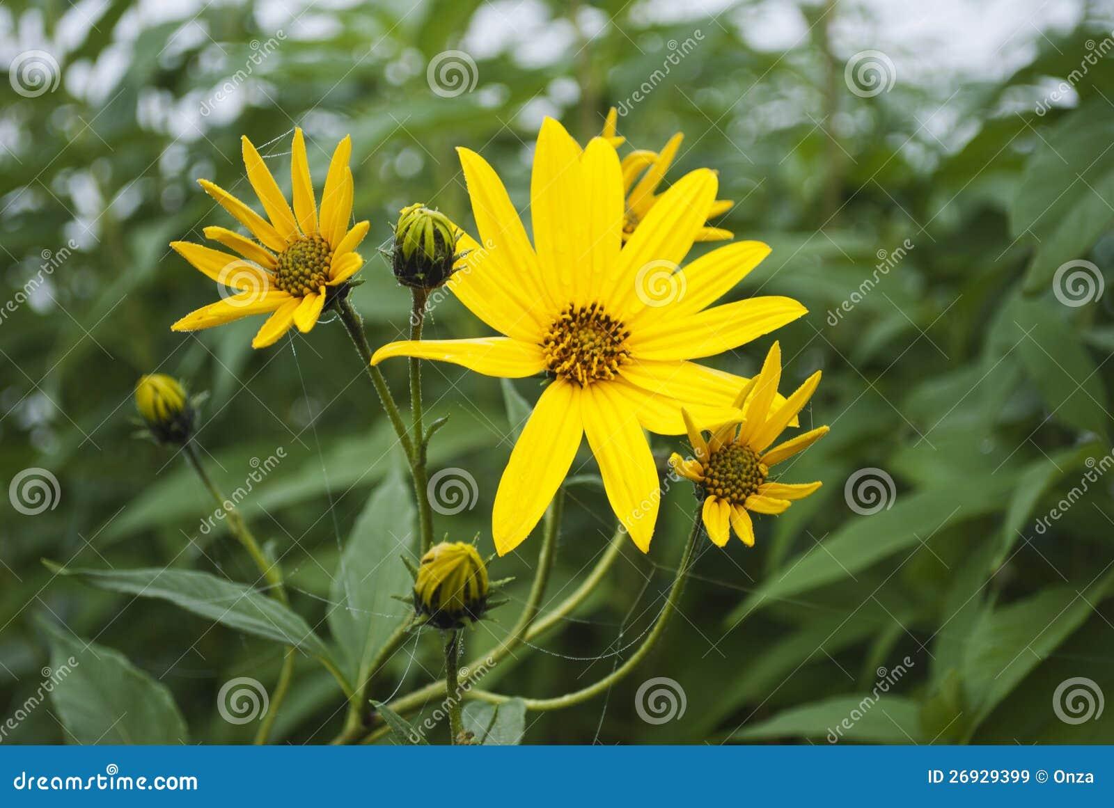 Fleurs jaunes d 39 automne images libres de droits image for Fleurs automne