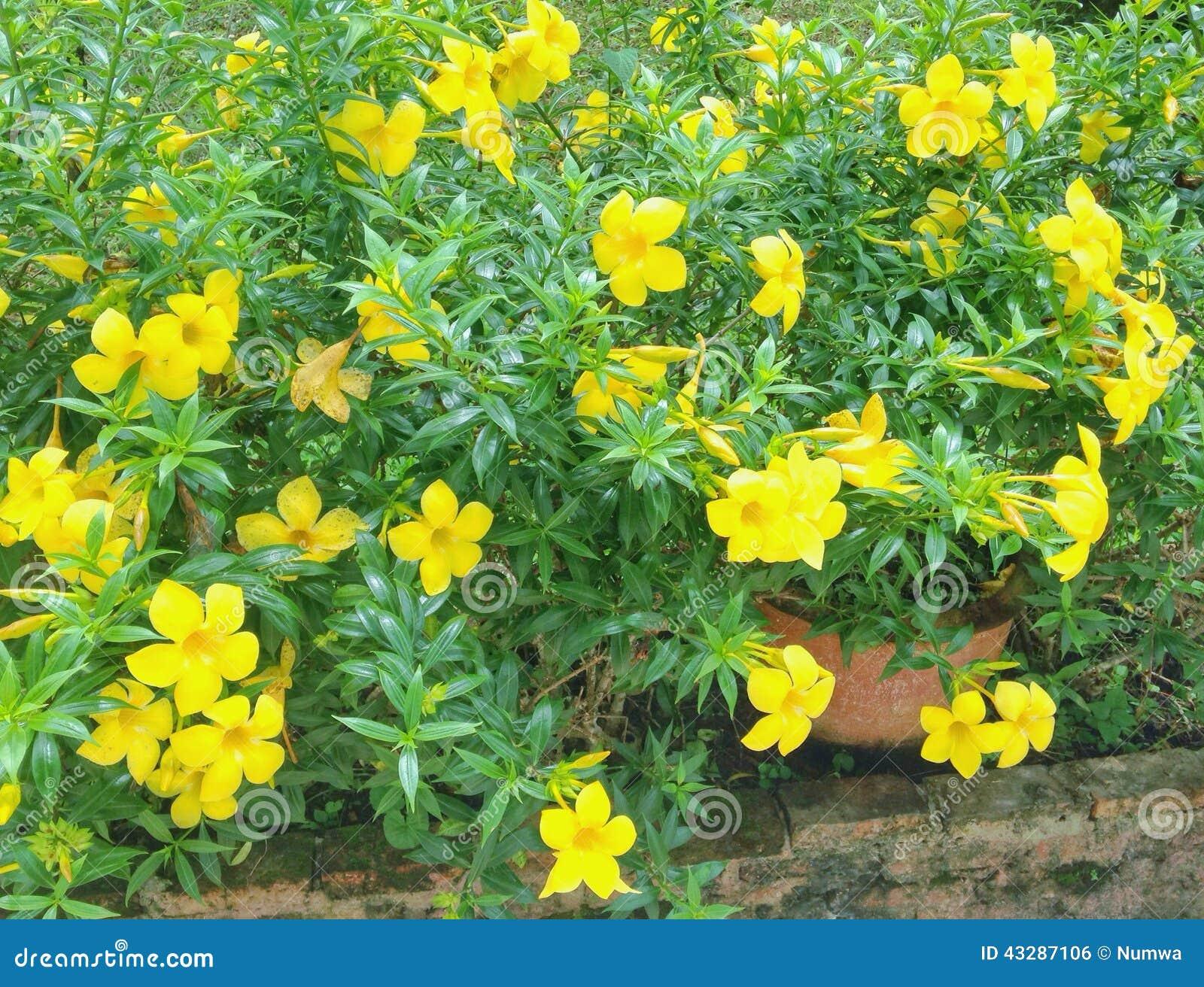 Fleurs jaunes dans le jardin photo ditorial image du for Fleurs dans le jardin