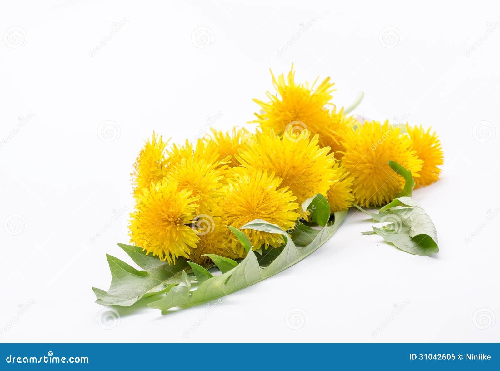 Fleurs jaunes de pissenlit dans un bouquet photo stock for Bouquet de fleurs jaunes
