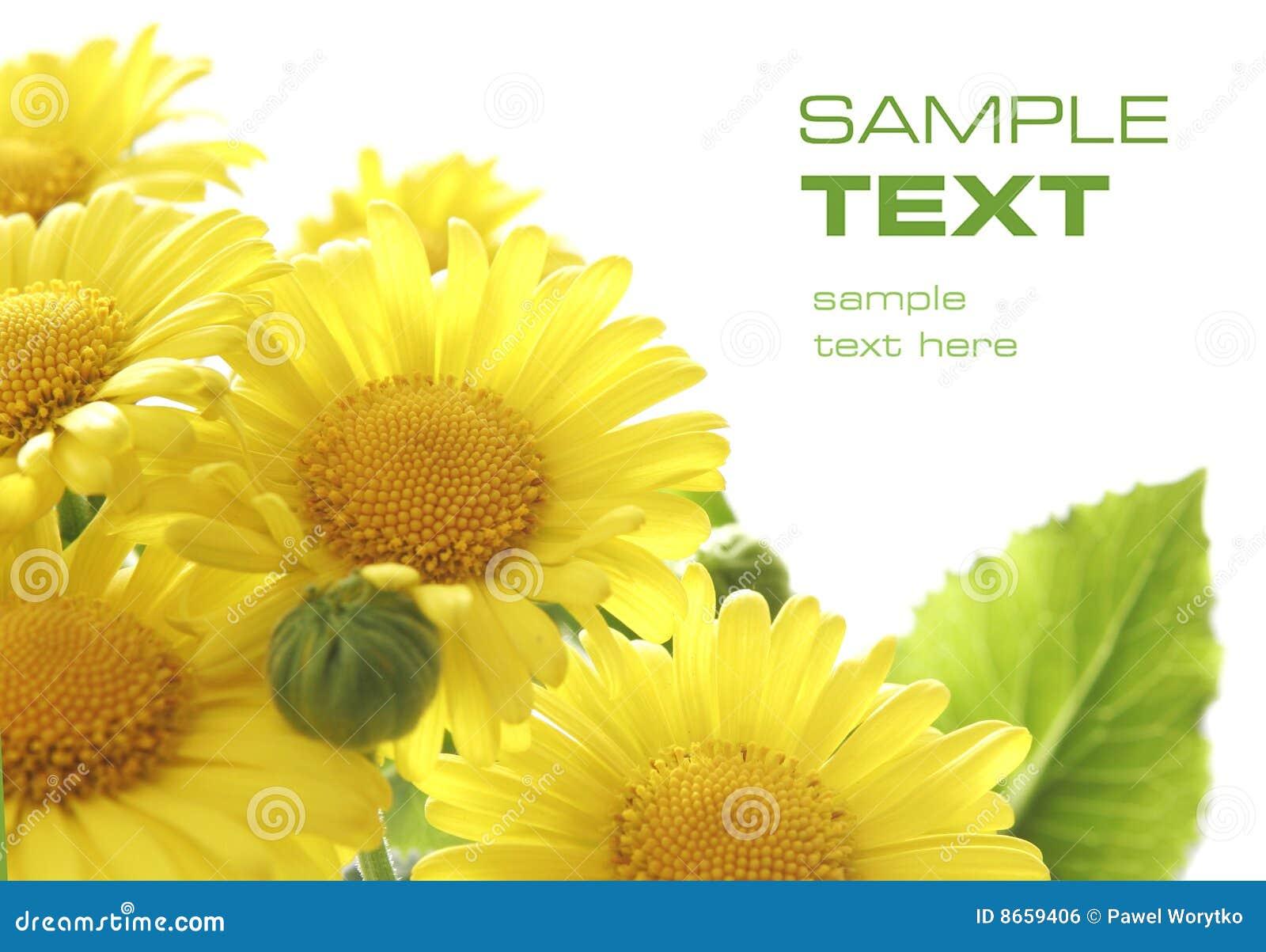 Fleurs jaunes de Preety