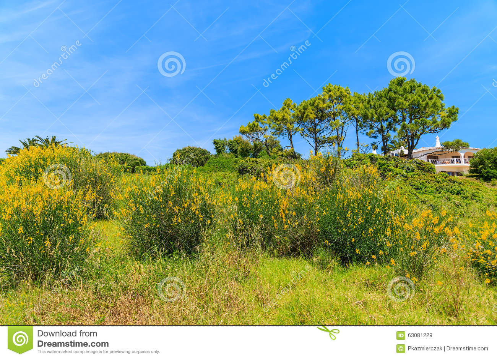 Download Fleurs Jaunes Sur Le Pré Vert Image stock - Image du couleur, faro: 63081229
