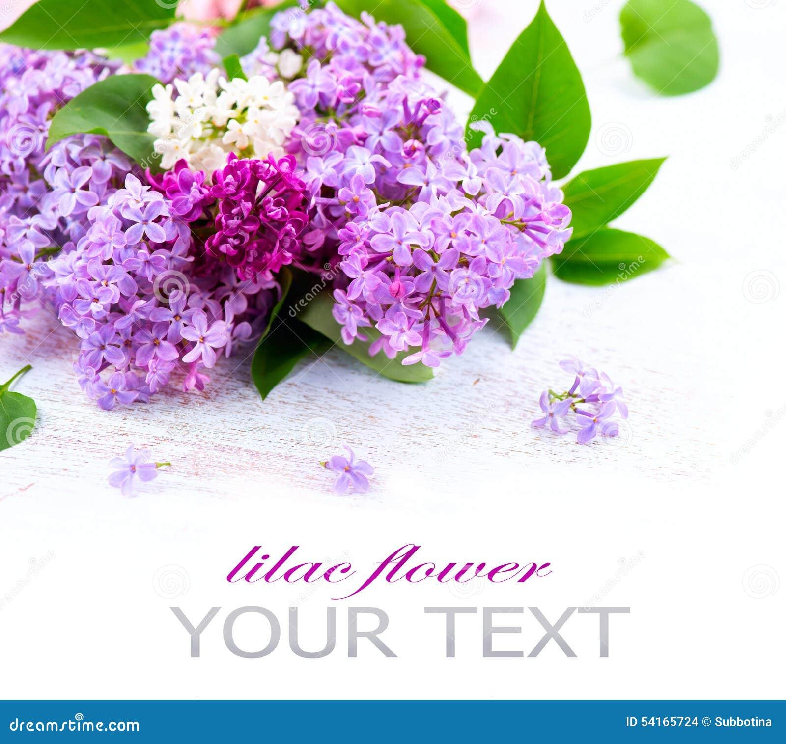 Fleurs lilas au-dessus du fond en bois blanc