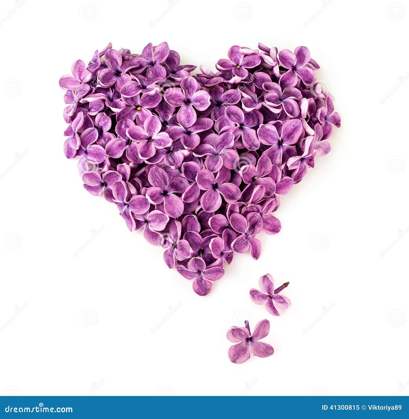 Fleurs lilas dans la forme du coeur photo stock image 41300815 - Fleur en forme de coeur ...