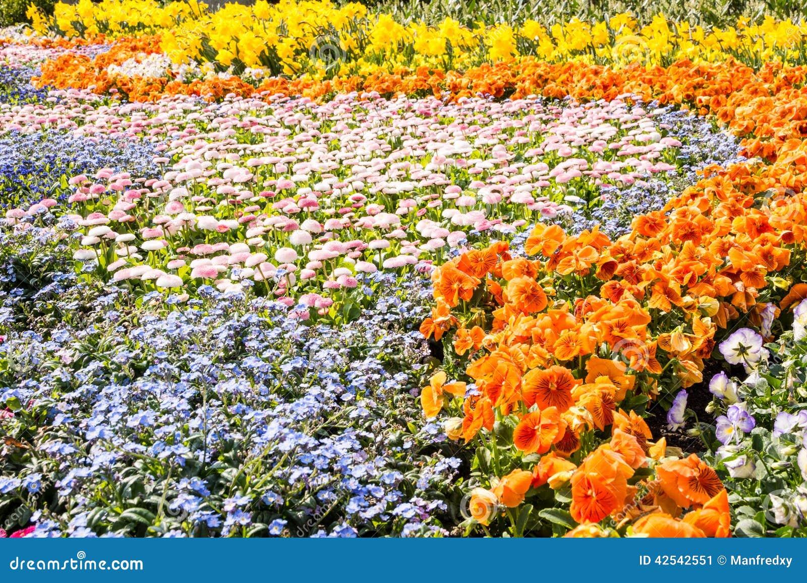 Fleurs magnifiques de ressort