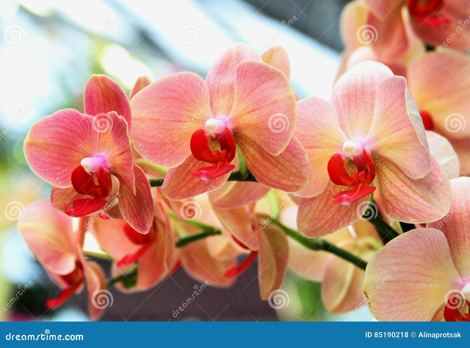 Fleurs Oranges D\'orchidée Dans Le Jardin Botanique Photo stock ...
