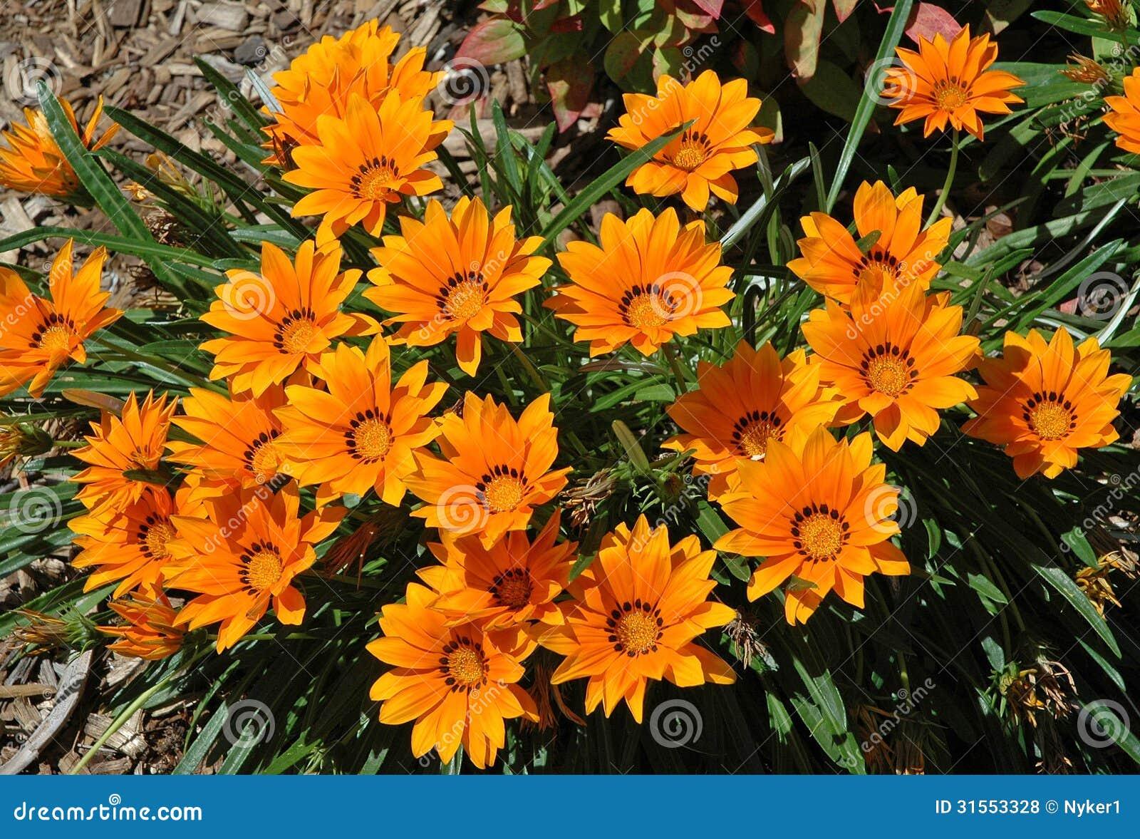 Fleurs de mariage Sydney