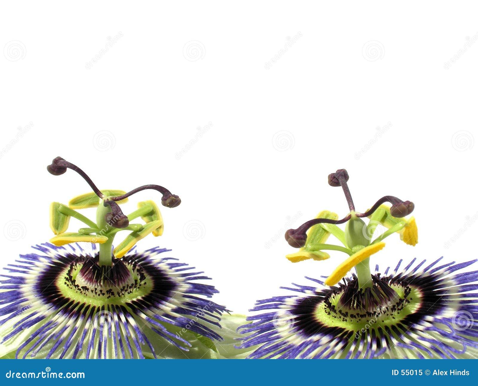 Fleurs passionnées