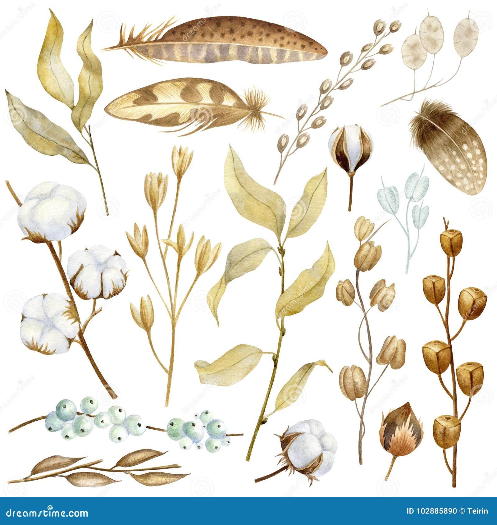 Fleurs peintes à la main d aquarelle, cosses sèches de graine, coton et branches dans le style de Bohème Éléments naturels rustiq