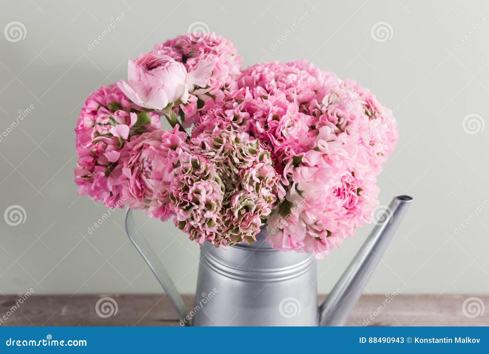 fleurs persanes roses de renoncule ranunculus boucl de pivoine dans la bo te d 39 arrosage grise. Black Bedroom Furniture Sets. Home Design Ideas