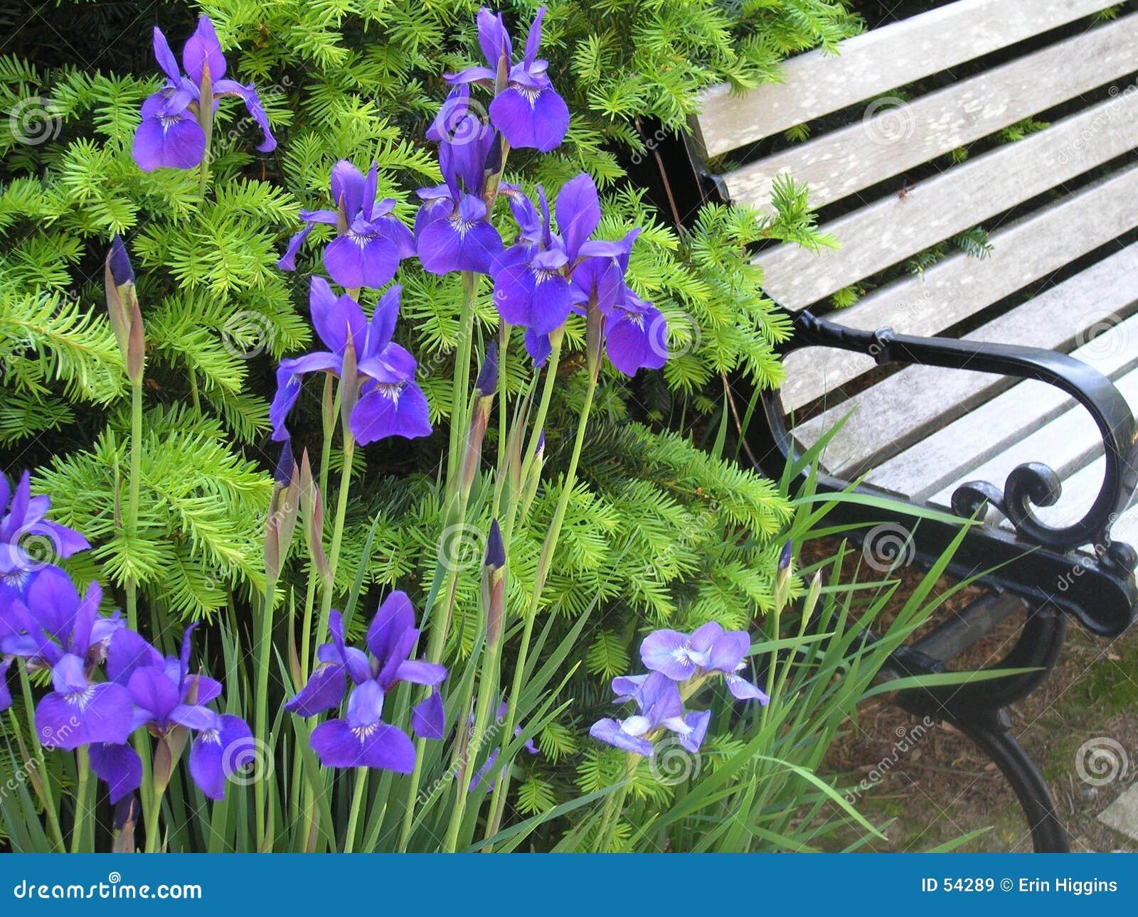Download Fleurs pourprées image stock. Image du ground, travaillé - 54289