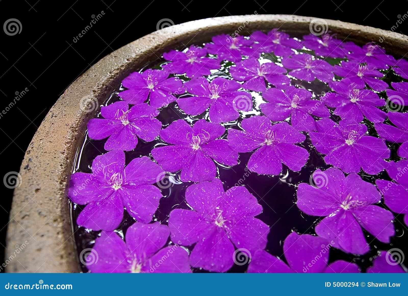 Fleurs pourprées dans un bac